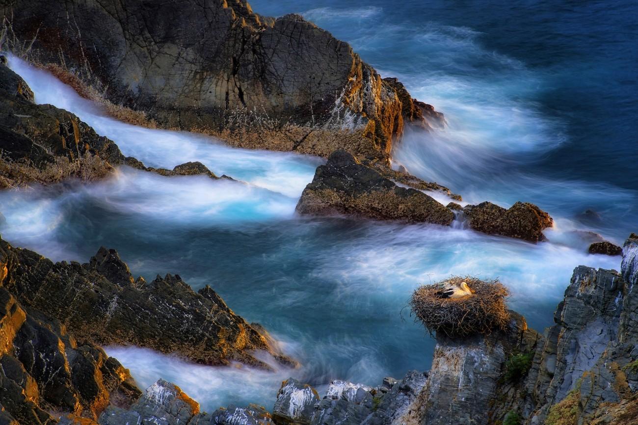 Поощрительная премия в категории «Красота природы», 2020. Гнездование аистов в диких скалах Португалии. Автор Станислао Базилео