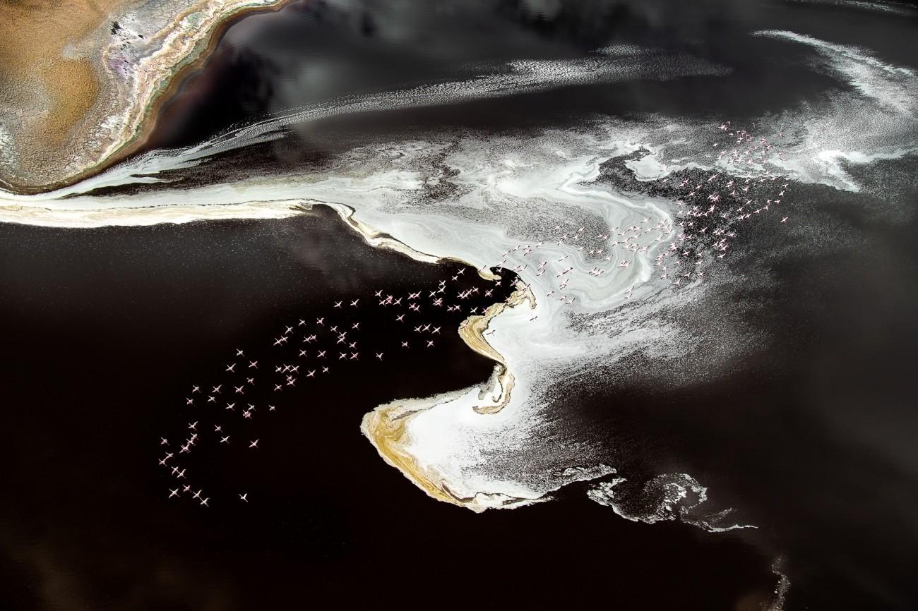 Поощрительная премия в категории «Красота природы», 2020. Миллионы фламинго встречаются в Кении. Автор Томас Виджаян