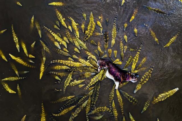 1 место в категории  «Красота природы». На реке в Замбии. Автор Игнасио Медем