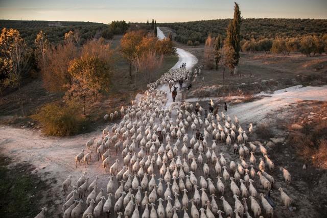1 место в категории «Путешествия и приключения». Пастушество в Испании. Автор Сусана Жирон
