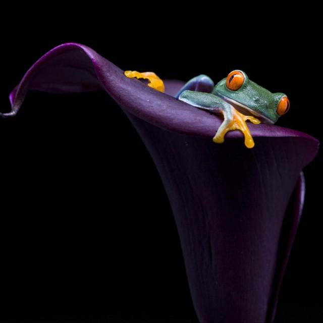 3 место в категории  «Красота природы». Карликовая лягушка в тропических лесах Коста-Рики. Автор Лян Ву