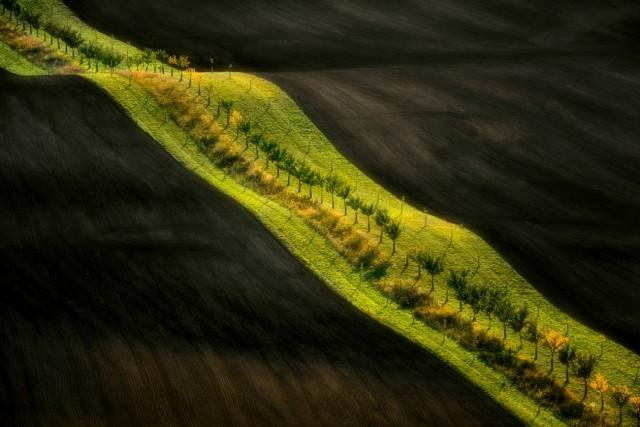 Поощрительная премия в категории  «Красота природы». Поле в Моравии, Чехия. Автор Ян Семинский