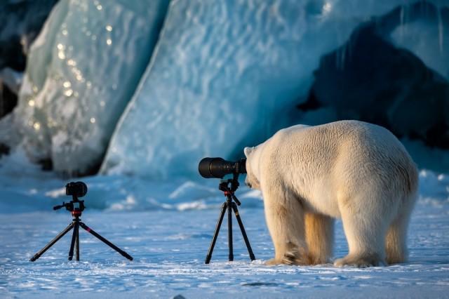 Поощрительная премия в категории «Путешествия и приключения». Любопытный белый медведь на Шпицбергене, Норвегия. Автор Рой Галиц