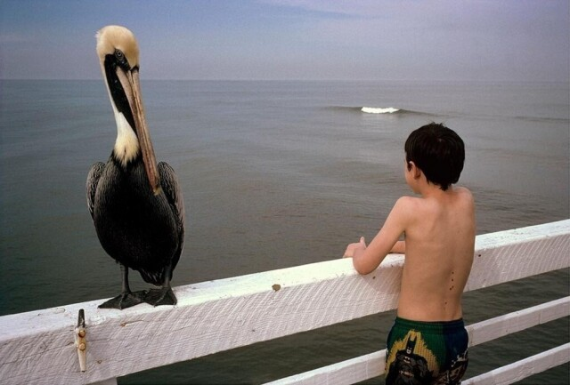 Пеликан и мальчик. Дейтона-Бич, Флорида, 1997. Фотограф Константин Манос
