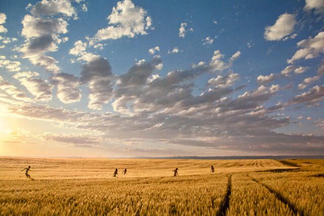 Спелый луг, 2012 год. Фотограф Райан МакГинли