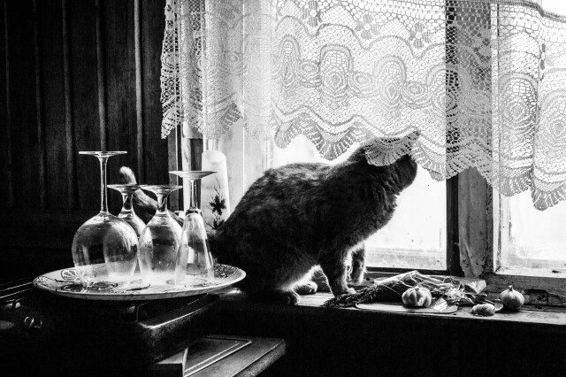 VIKTOR PETROVICH - фотоистория - 03.06.2021