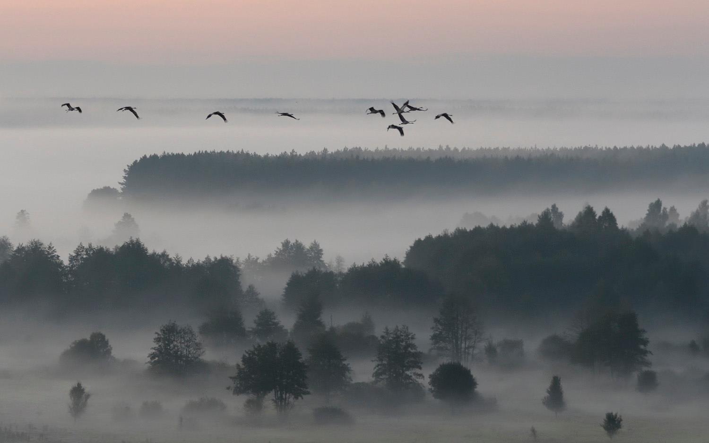 Утро в заповеднике «Брянский лес». Фотограф Игорь Шпиленок