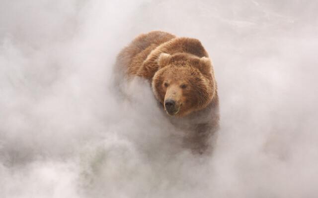 Медведь в пару от гейзера. Долина гейзеров, Кроноцкий заповедник. Фотограф Игорь Шпиленок