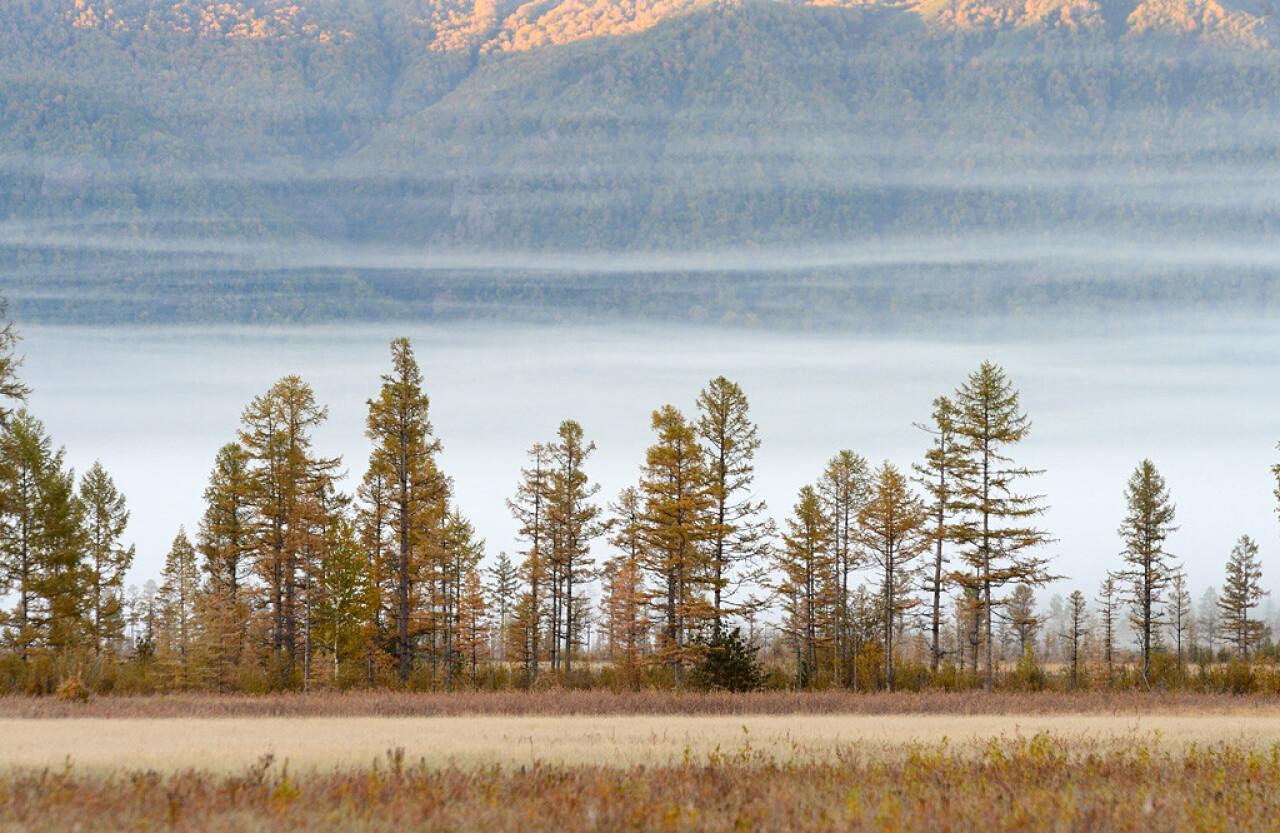 Утро в долине реки Левая Щапина. Фотограф Игорь Шпиленок