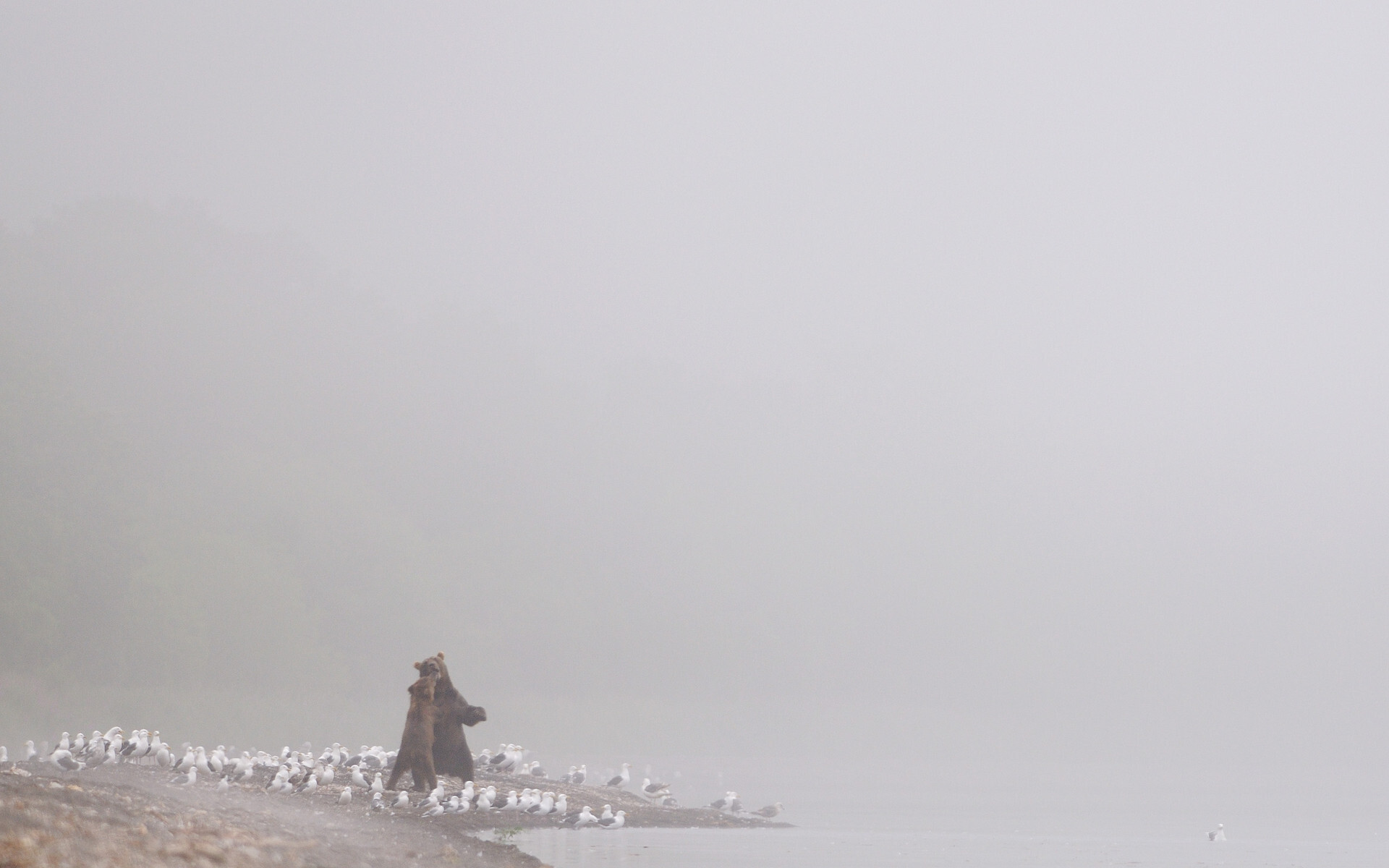 Южно-Камчатский федеральный заказник, медведи. Фотограф Игорь Шпиленок