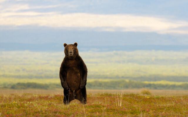 Медведь. Фотограф Игорь Шпиленок