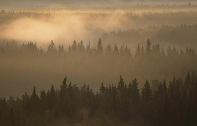 Рассвет в Печоро-Илычском заповеднике. Фотограф Игорь Шпиленок