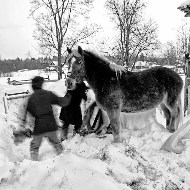 Смирная лошадка. Кувшиново, 2013. Фотограф Борис Назаренко