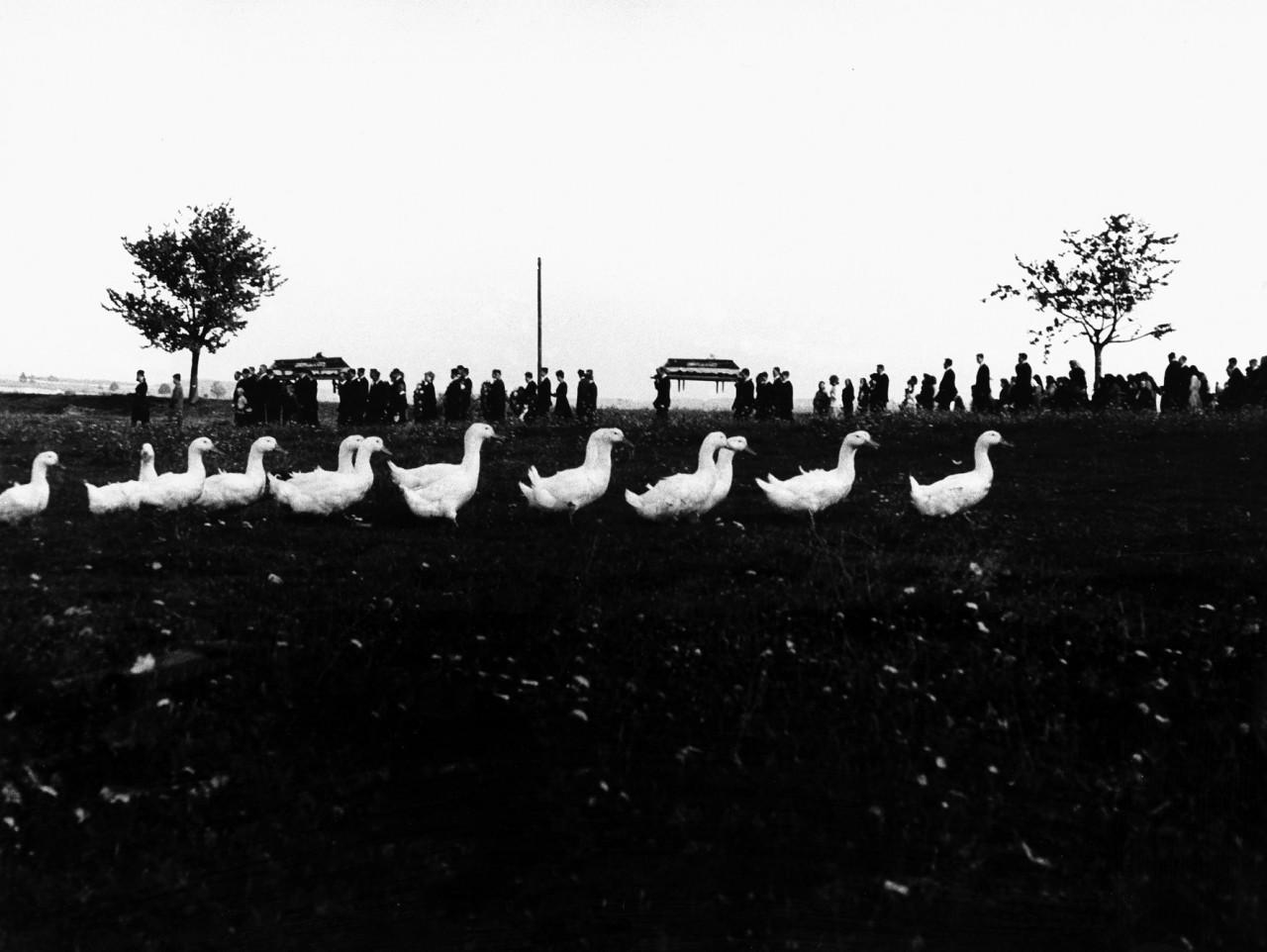 Похороны и утки, Течанов, Чехия, 1965. Йиндржих Штрейт