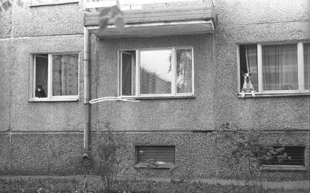 Кот и дог, Москва, 1980 год. Фотограф Владимир Богданов