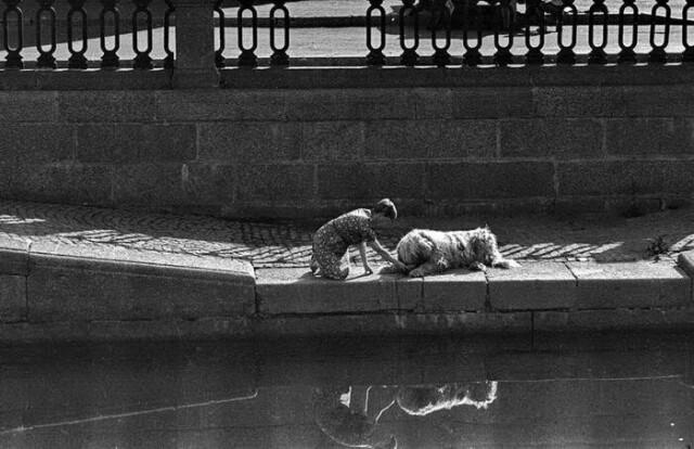 Собака пьет, Ленинград, 1970-е годы. Фотограф Владимир Богданов