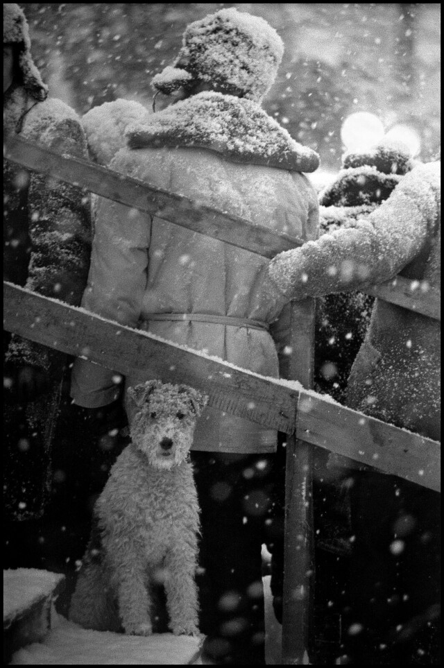 «Не моё собачье дело», Ленинградская область, 1965 год . Фотограф Владимир Богданов