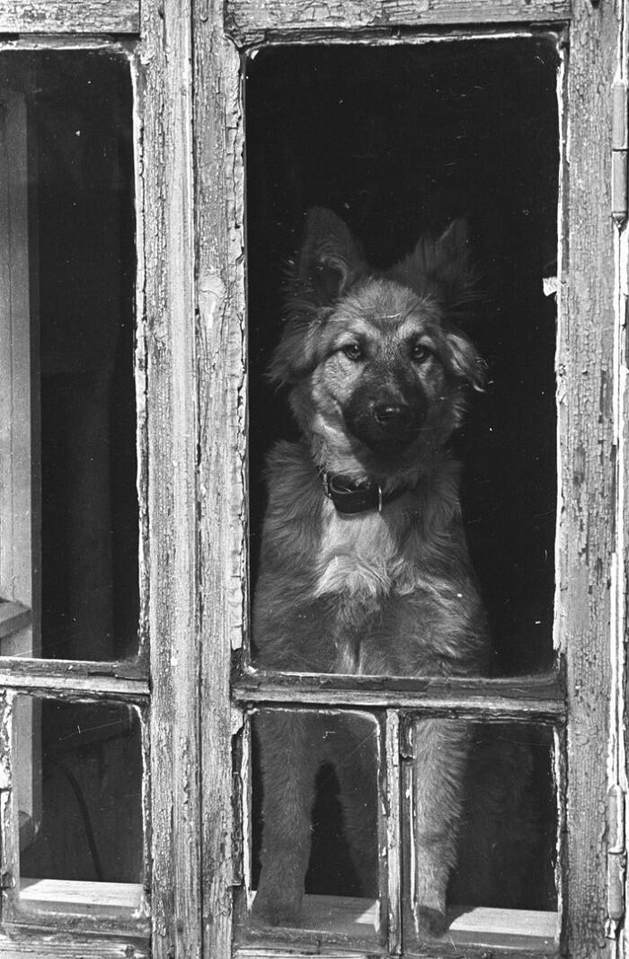 У окна, 1980-е годы. Фотограф Владимир Богданов