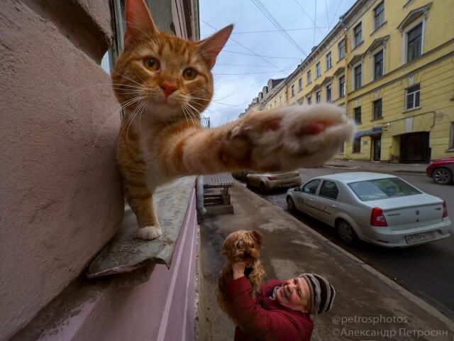Весёлый стритлайф. Фотограф Александр Петросян