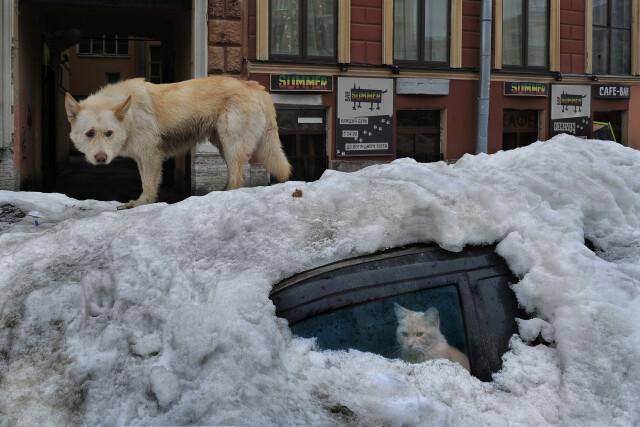 Пёс и кот. Фотограф Александр Петросян