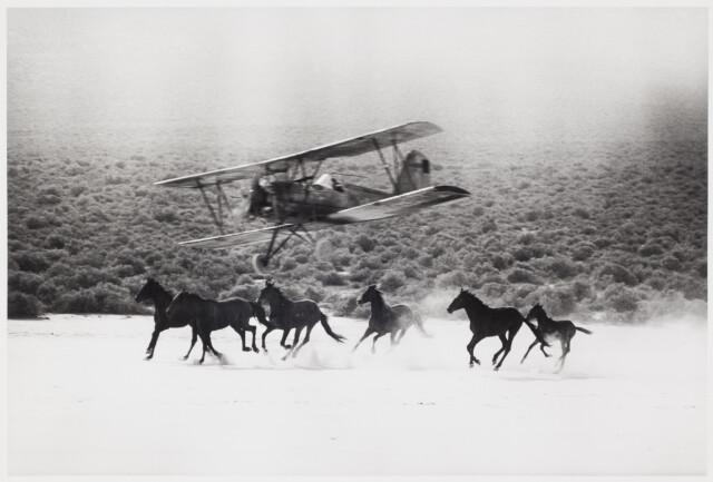 Мустанги на съёмочной площадке «Неприкаянных». Фотограф Эрнст Хаас
