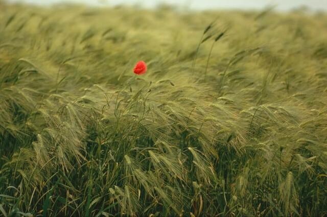 Цветы. Фотограф Эрнст Хаас