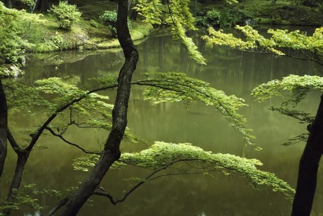 Киото, Япония, 1984. Фотограф Эрнст Хаас