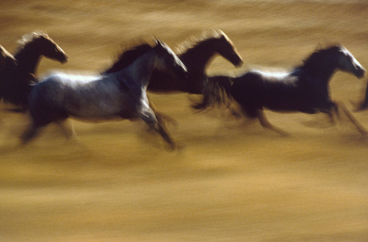 Лошади. Фотограф Эрнст Хаас