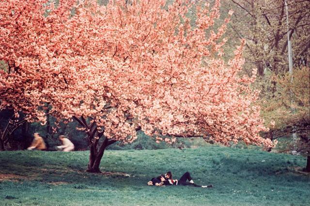 Весна. Центральный парк, Нью-Йорк, 1970. Фотограф Эрнст Хаас