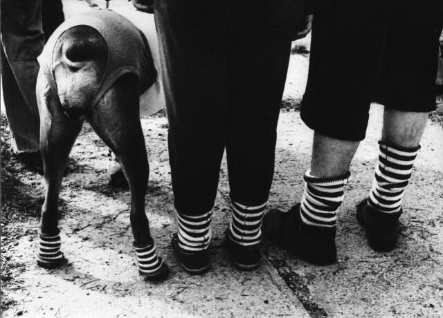 Из серии «Собаки и люди», 1972. Фотограф Франтишек Досталь