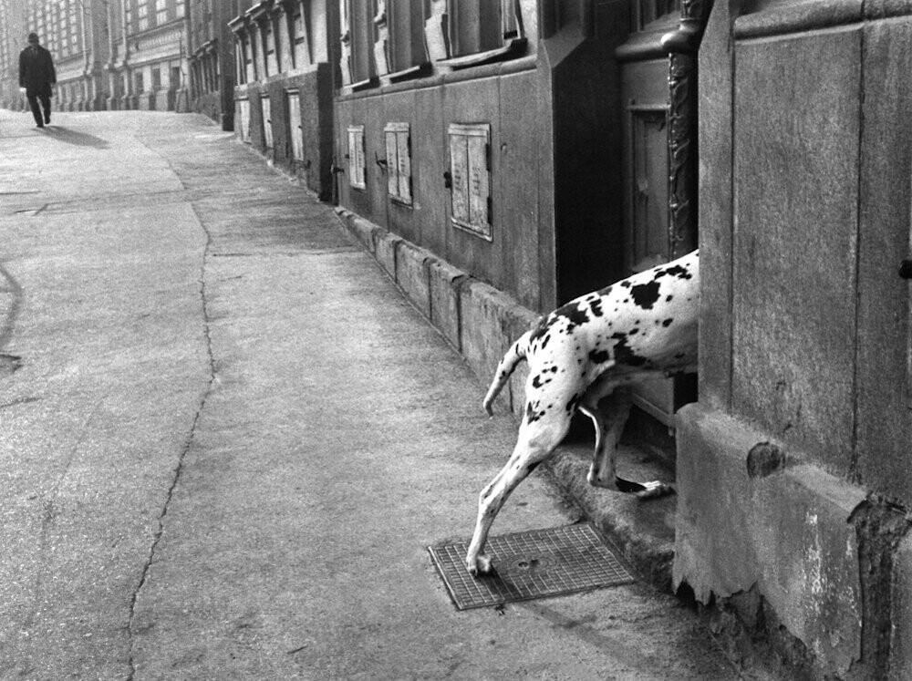 Пятнистая собака, 1978. Фотограф Франтишек Досталь