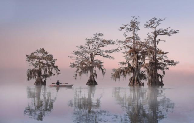Финалист в категории «Путешествия», 2020. Осеннее утро на американских кипарисовых болотах. Автор Келли Чи