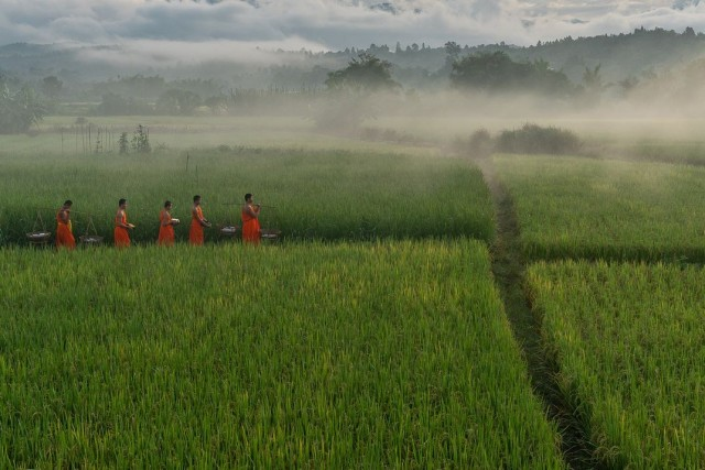 Финалист в категории «Люди», 2020. Послушники возвращаются в храм через рисовое поле после сбора милостыни, Таиланд. Автор Сара Ваутерс