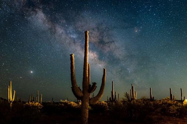 Победитель в категории «Американский опыт», 2020. Млечный Путь над кактусами Сагуаро в пустыне  Сонора, штат Аризона. Автор Линси Шредер
