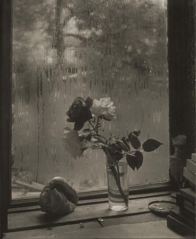 Последняя Роза. Фотограф Йозеф Судек