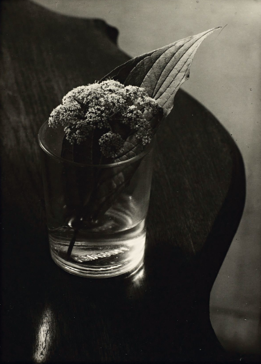 Цветок и лист в стакане, 1963 год. Фотограф Йозеф Судек