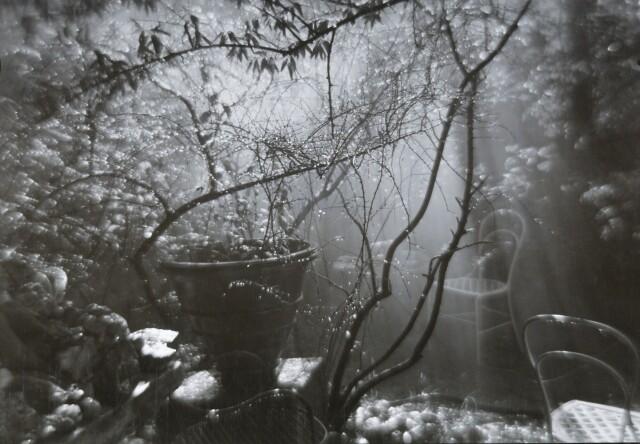 Волшебный сад во время летнего ливня, 1950-е годы. Фотограф Йозеф Судек