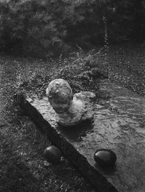 Из серии «В волшебном саду», примерно 1950 год. Фотограф Йозеф Судек