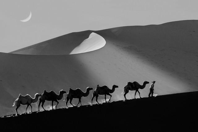 «Возвращение домой». Бадань-Цзилиньская пустыня. Поощрительная премия в категории «Путешествия», серия, 2020. Автор Шин Ву Рю