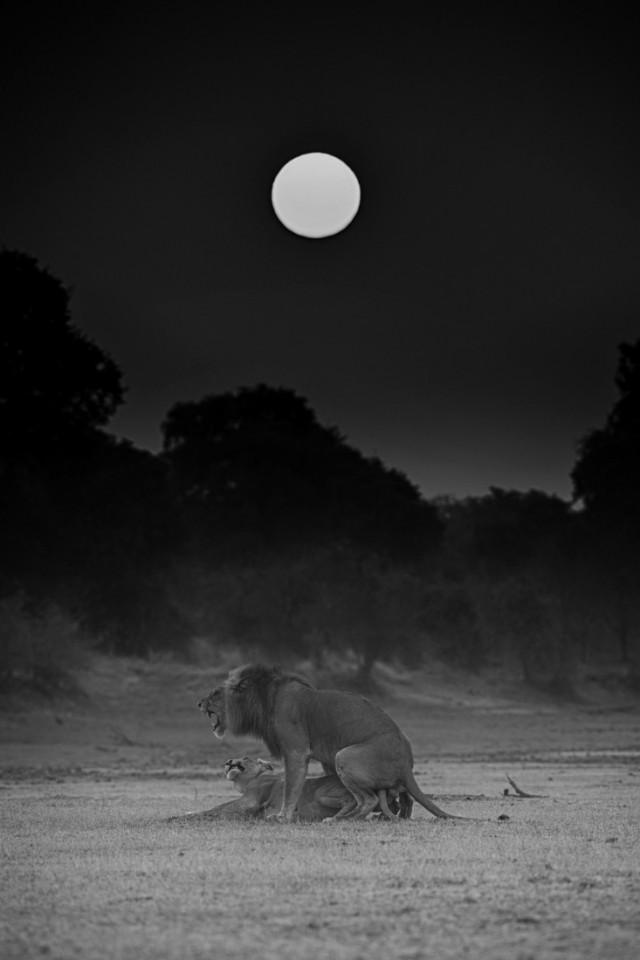 «Восход в Южной Луангве», Замбия. 3-е место в категории «Дикая природа», 2020. Автор Николь Камбре