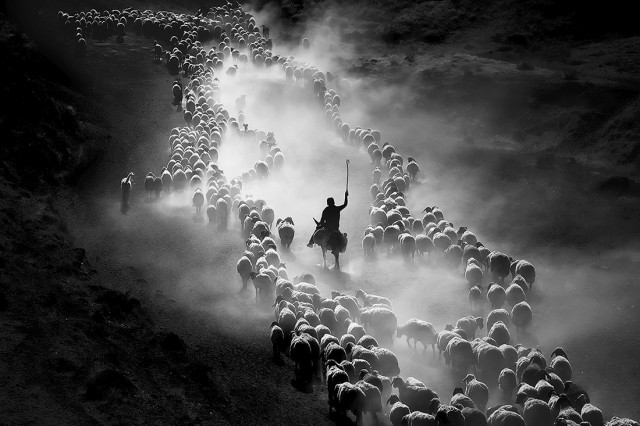 «Овечье стадо». 1-е место в категории «Путешествия», 2020. Автор Ф.Дилек Уяр
