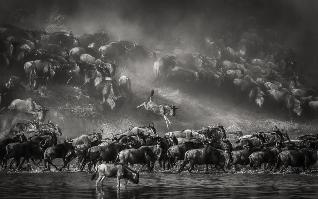 «Переправа через реку Мара». 1-е место в категории «Дикая природа», серия, 2020. Автор Артур Станьевич
