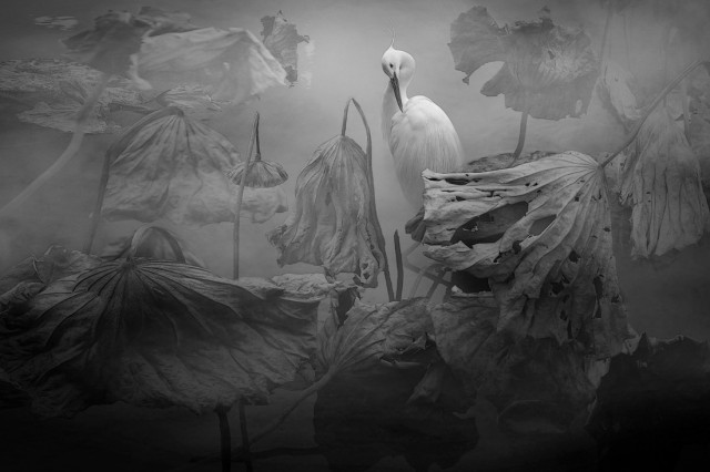 2-е место в категории «Файн-арт», 2020. Автор Chengbo Sun