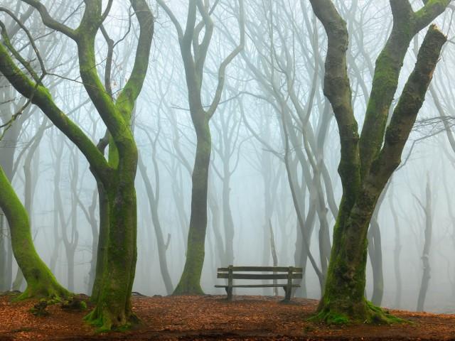 Туманный вид. Автор Ларс ван де Гоор