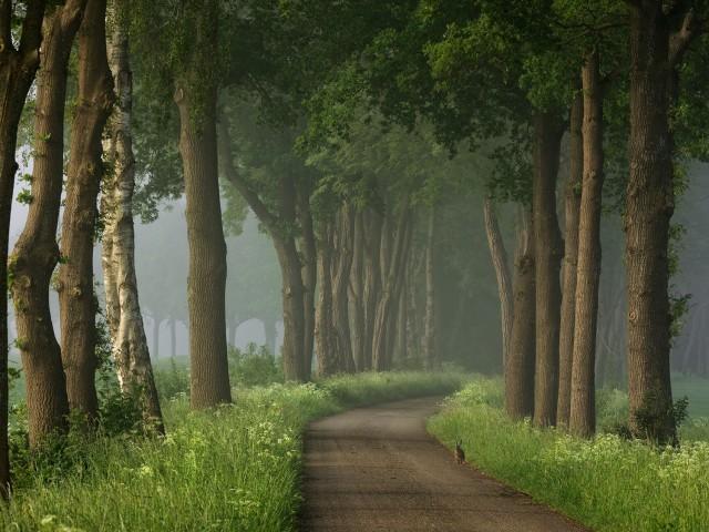 На лесной дороге. Автор Ларс ван де Гоор