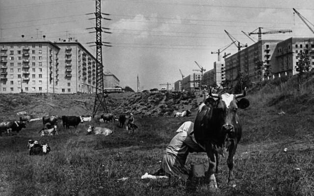 «Город строится». Черёмушки, Москва, 1954. Фотограф Лев Бородулин