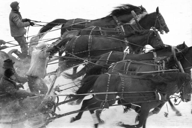 Упряжка лошадей, 1960. Фотограф Юрий Абрамочкин