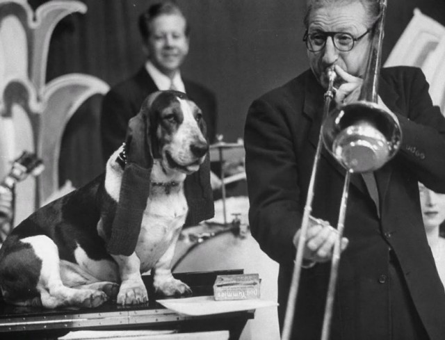 Собака на телевидении слушает тромбониста Майка Райли, 1950. Уолтер Сандерс