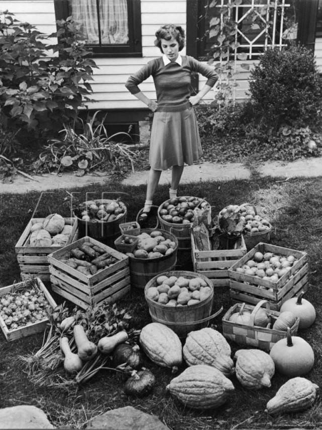 Урожай на зиму, сентябрь 1943 года. Уолтер Сандерс