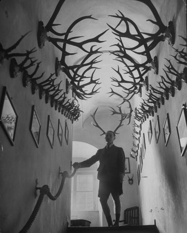 Франц Иосиф Турн-и-Таксис среди своей коллекции из 2000 оленьих рогов, 1949. Уолтер Сандерс